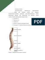 Anatomi Case tulang belakang