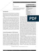 Bacterial cells.pdf