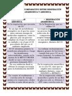 CUADRO COMPARATIVO ENTRE RESPIRACIÓN ANAEROBICA Y AEROBICA