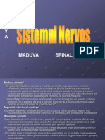 Sist.nervos2