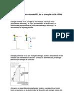 Captación y transformación de la energía en la célula vocabulario 1