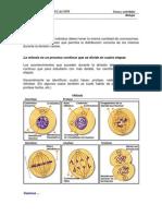 4-3S-Mitosis.pdf