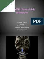 Neurona y Neurotransmisores