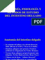 anafisioestudioidfileminimizer-090829181407-phpapp01