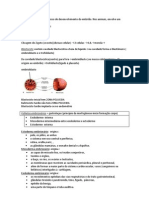 embriologia - organogenese