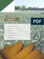 Maize 06