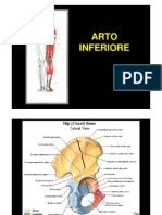 Arto inferiore.pdf
