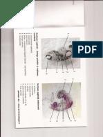 Atlas Embrio II (1)