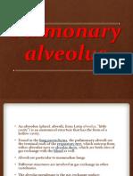 Pulmonary Alveolus - Copy