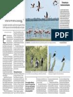 Piura y El Birdwatching