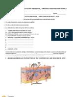 Imprimir Primer Examen Rehab Indiv - 1er Modulo - La Catolica