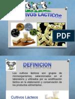 cultivos lacticos