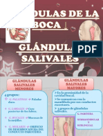 Glandulas Salivales PDF