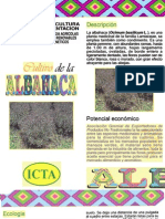 cultivoAlbahaca