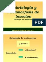 04.Metamorfosis Agr Zootec