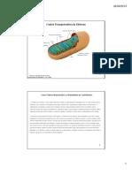 Cadeia Transportadora e Fosforilação Oxidativa 2013