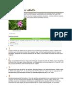 Cómo cultivar alfalfa