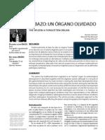 4.Bazo