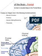 Lobes of the Brain - Frontal