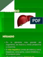 HISTOLOGIA_HIGADO_Y_PANCREAS V2.pptx