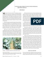 PDF Teknik Pemberian Pupuk Organik Dan Mulsa Pada Budi Daya Tanaman Buah Mentimun Jepang