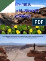 En Chile Hasta El Desierto Florece
