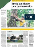 Negocio Caucho Amazonia Peru