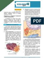 TeoriaCitoplasma.pdf