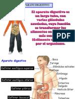 145_Anatomia Del Sistema Digestivo