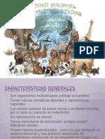 Caracteristicas Generales, Origen y Clasificiacion Del Reino ANIMAL