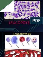 leucopoyesis FINAL.pptx