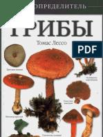 setas.pdf.pdf
