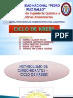 Metabolismo de Carbohidratos - Ciclo de Krebbs Final
