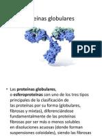 Proteinas Globulares y Fibrilares