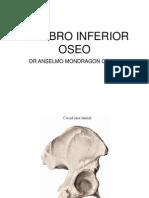2 Miembro Inferior Huesos y Art. Coxo-femoral (Dr. Mondragon)