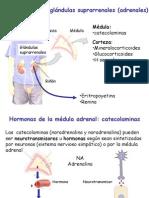 Hormonas Corticoesteroides