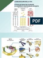 Molecole e Macromolecole Biologiche