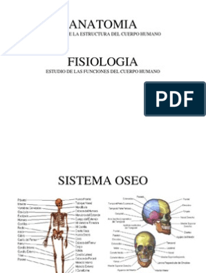 anatomia da prostata pdf free