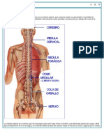 Lesion Medular Basico