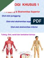 Myologia Dorsi Et Extremitas Superior (Radius FKUndip's Conflicted Copy 2013-03-16)