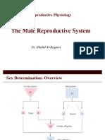 Male Reproductive (1)
