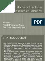 Anatomía y Fisiología Reproductiva en Vacunos
