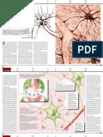 Neurociencia Reloaded