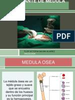 Trasplante de Medula Osea