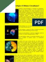 Reloj Biologico O Ritmos Circadianos (Psicologia.com)