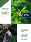 Butterfly_motivasi