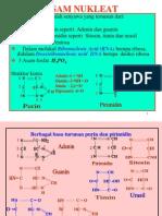 4 Nukletid Puri Primidin1
