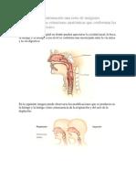 Anato de Respiracion