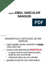 LP II-1-Sistem Vascular 2013