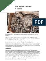 Massenmord an Büffelkälber für Mozzarella in Italien